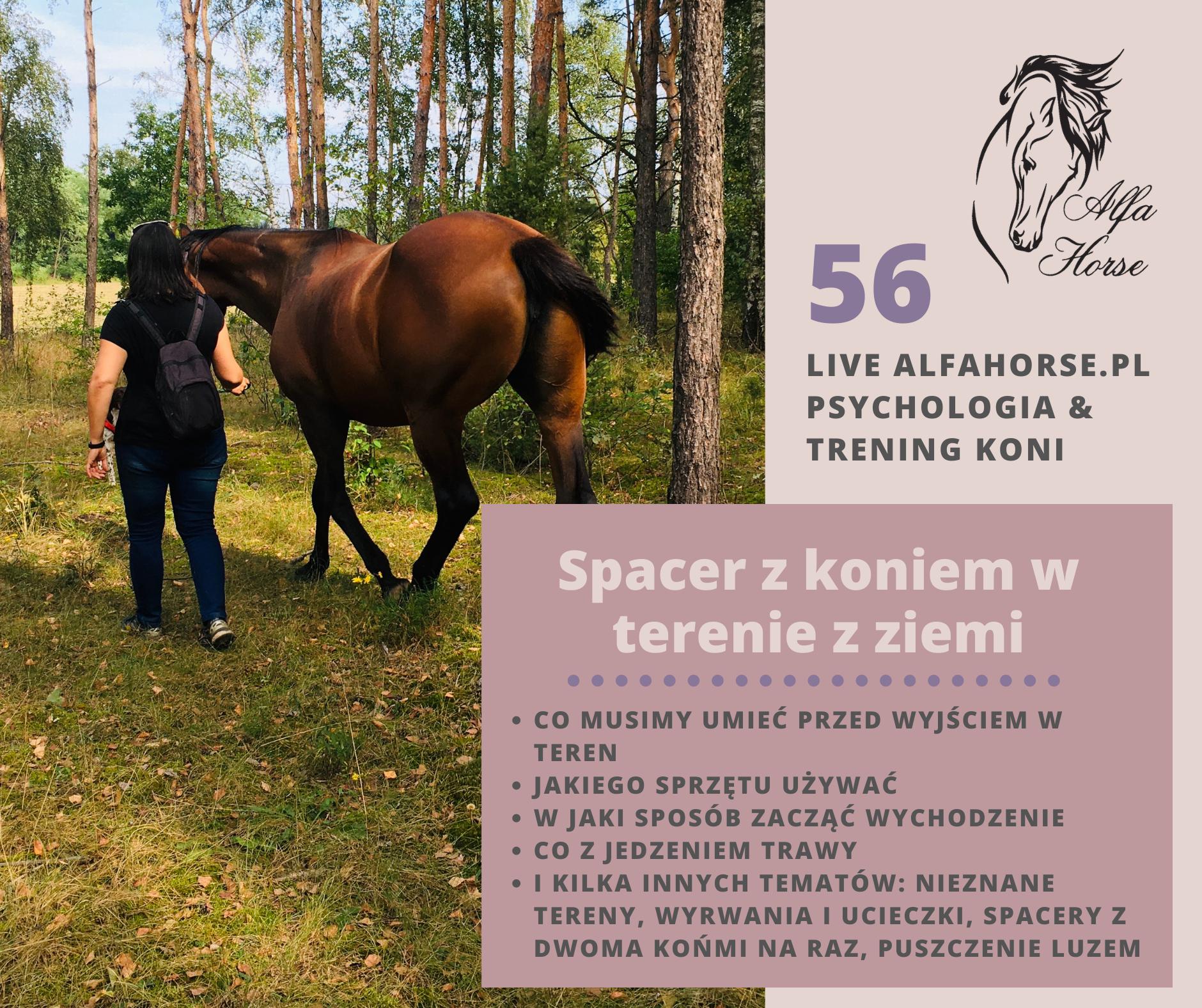 live_56_spacery_teren_z_ziemi_trening_koni