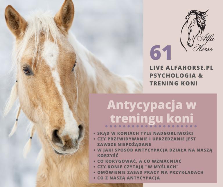 live_61_antycypacja_trening_koni_przewidywanie_wyprzedzanie_polecen