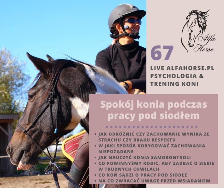 live_67_spokoj_konia_pod_siodlem_trening