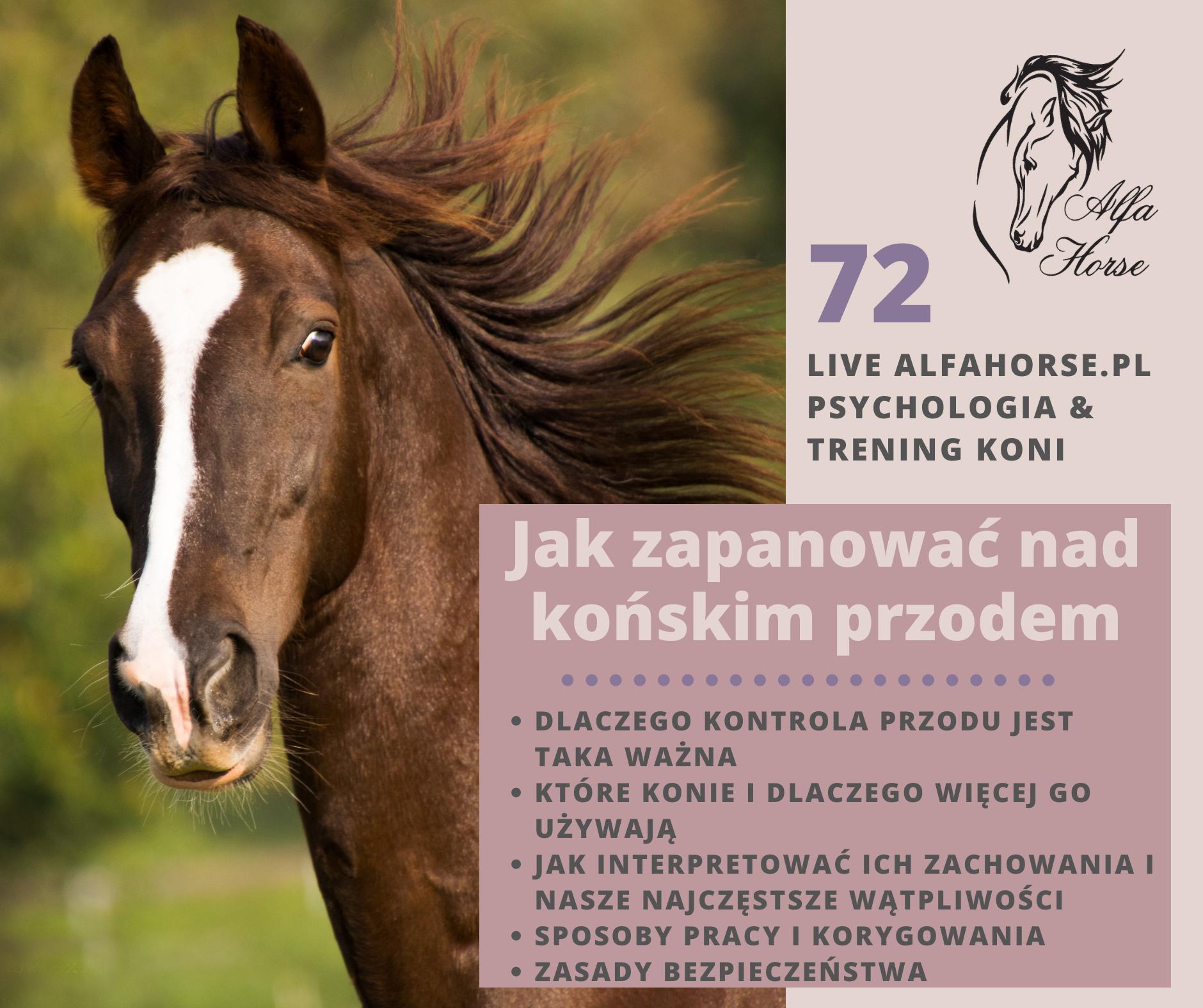 live_72_jak_zapanowac_nad_konskim_przodem