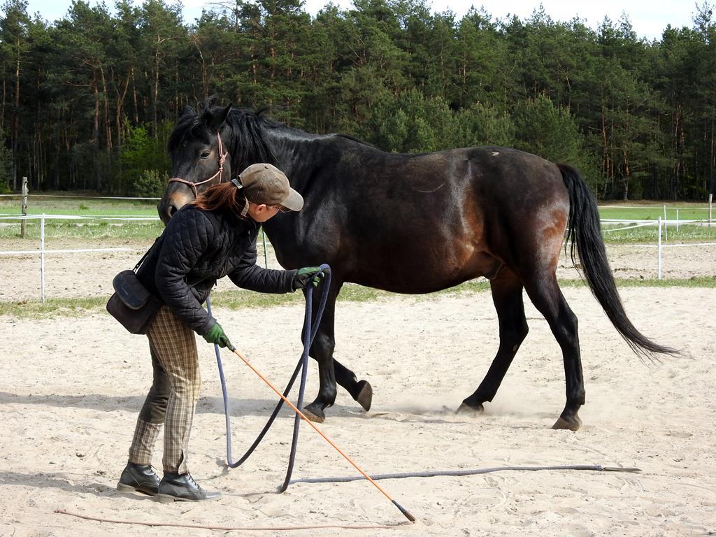 kontrola_zadu_odangazowanie_trening_koni