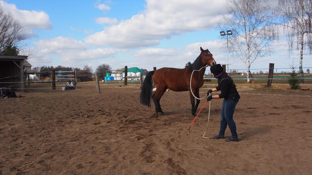 kontrola_zadu_konia_odangazowanie_trening_konia_naturalny_16