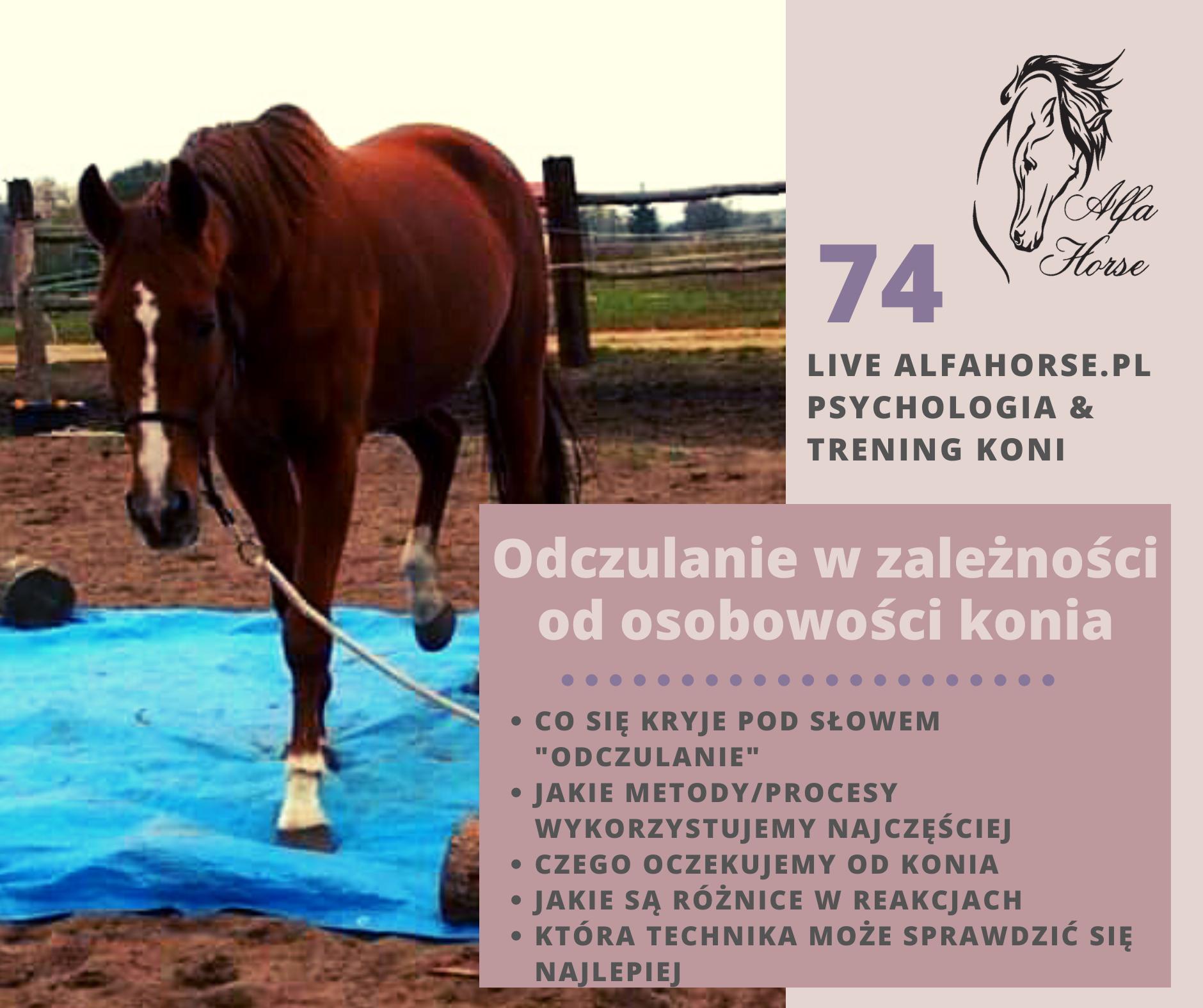 live_74_odczulanie_w aleznosci_od_osobowosci_konia