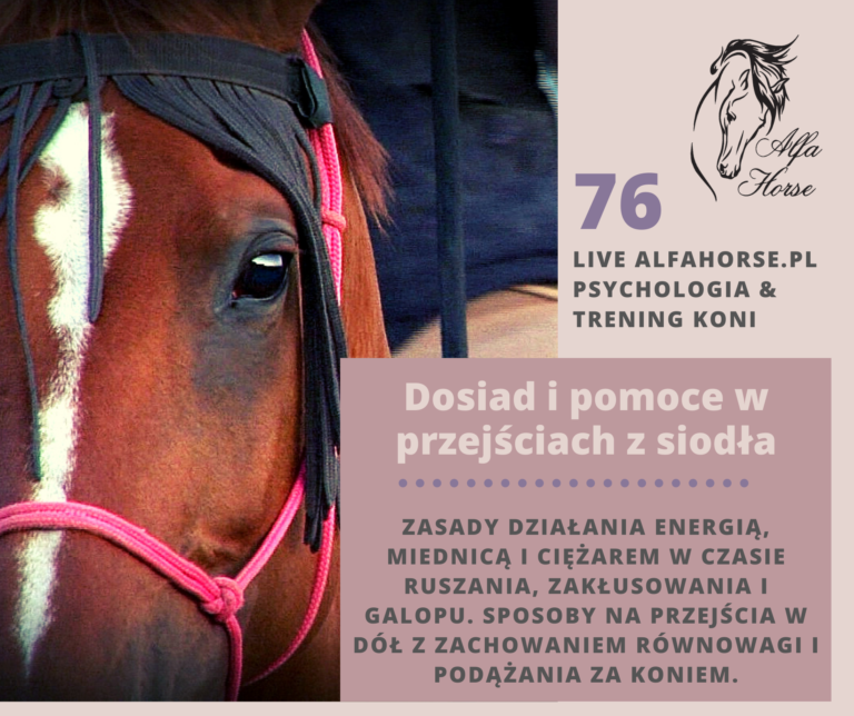 live_76_dosiad_pomoce_przejscia_jazda_konna