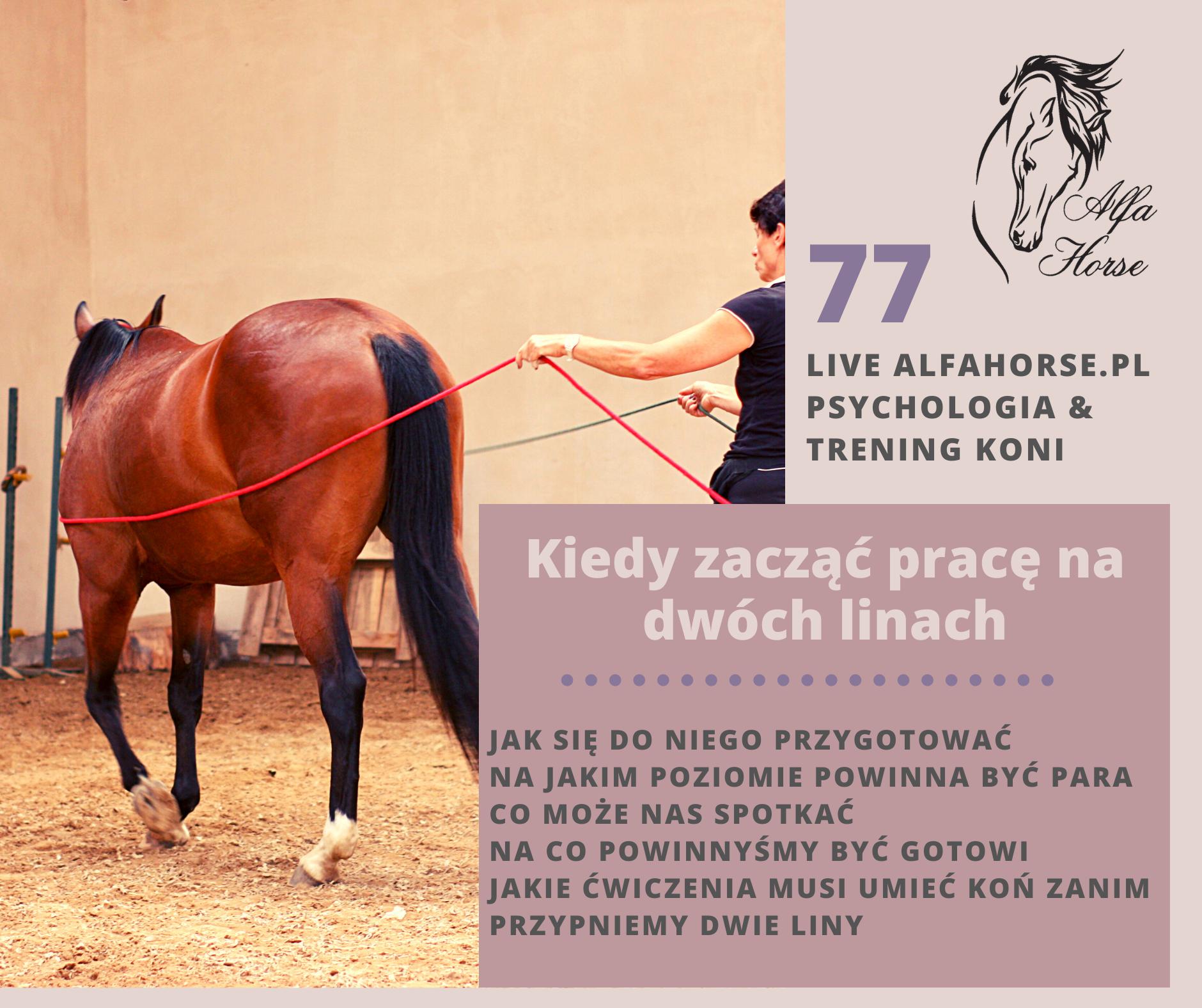 live_77_kiedy_rozpoczac_prace_na_dwoch_linach_trening_koni