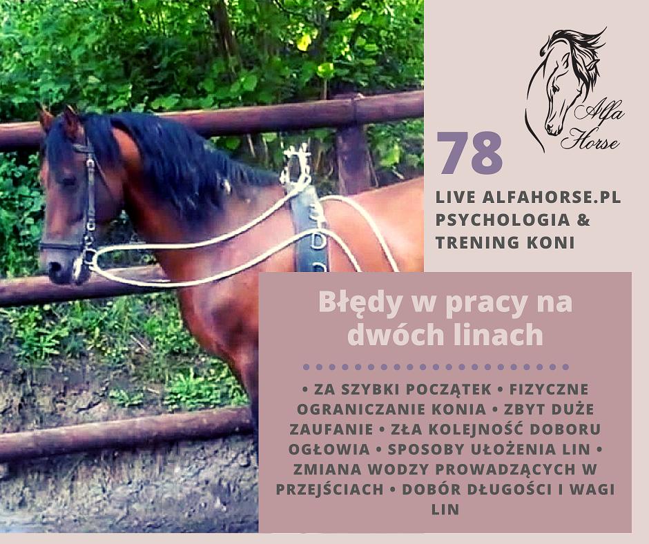 live_78_bledy_w_treningi_koni_na_dwoch_linach