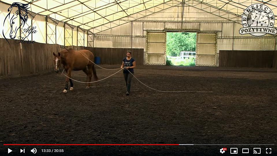 praca_na_dwoch_linach_trening_konia_1