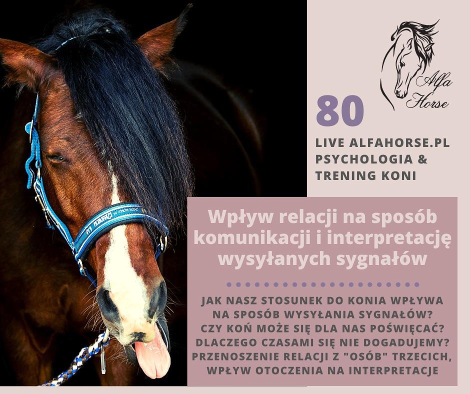live_80_wplyw_relacji_na_wysylane_sygnaly_i_interpretacje_trening_koni